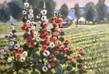Roadside Hollyhocks, Waupoos
